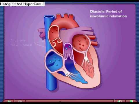 Cardiac Cycle - Systole & Diastole