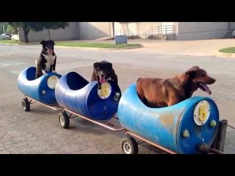 Fort Worth Dog Train - All Aboard!