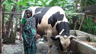 'Raja Babu' of Manikganj | Naya Diganta
