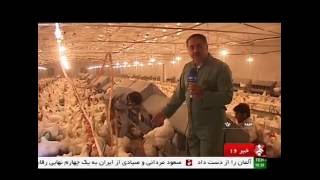 Iran Meybod county, Chicken farming & Egg products مرغداري صنعتي شهرستان ميبد ايران