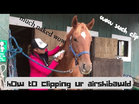 How 2 clipping your an Harse