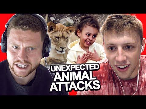 SIDEMEN REACT TO UNEXPECTED ANIMAL ATTACKS