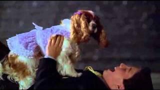 Bradley Steven Perry - Me & My Girl