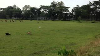 Bangladesh sylhet new Patly village