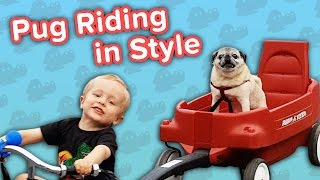 Pugs Riding Wagons & Playful Puppies // Funny Animal Compilation