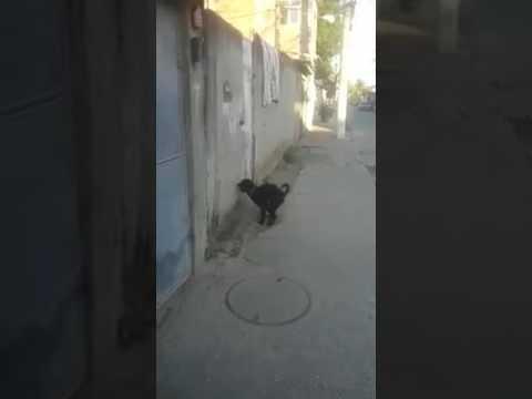 Xxx Mp4 दुनिया का पहला कुत्ता जो पकड़ा गया मुठ मारते हुए ।। Whatsapp Latest 2017 3gp Sex