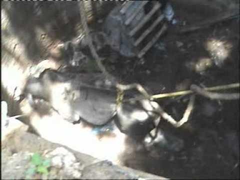 Rescue Operation of a bull in a well - Neem ka Thana ( Sikar )