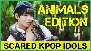 Scared K-Pop Idols: Animals Edition 1
