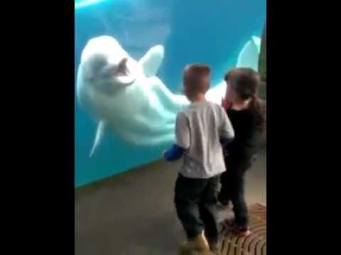 Uma Baleia branca brinca com duas crianças