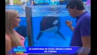 Domingo Legal - Celso, Bruna e Diana se divertem no Sea World