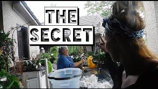 The Secret!