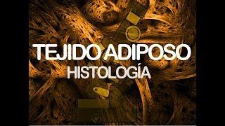 Tejido Adiposo | Histología