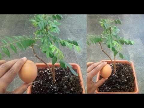 Xxx Mp4 ഇതു കൊള്ളാല്ലോ HOMEMADE ORGANIC PLANT FERTILIZER 3gp Sex