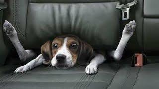 Videos para morir de la risa 2017, los animales más graciosos del mundo