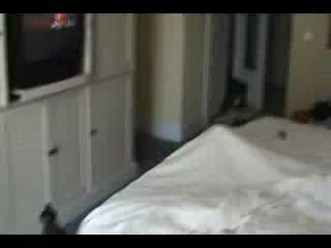 Honeymoon Videos
