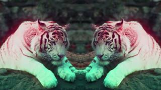 Benny Benassi & SOFI TUKKER - Everybody Needs A Kiss (Official Video) [Ultra Music]
