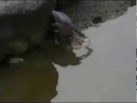Xxx Mp4 Mp4 Heron Baiting Xxx 3gp Sex