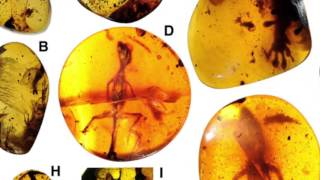 Science Today: Amber