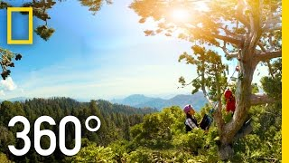 360° Giant Sequoias on a Changing Planet – Part 2 | National Geographic