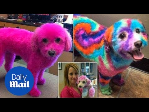Xxx Mp4 A Woman Is Defending Her Decision To Dye Her Dog S Fur Daily Mail 3gp Sex