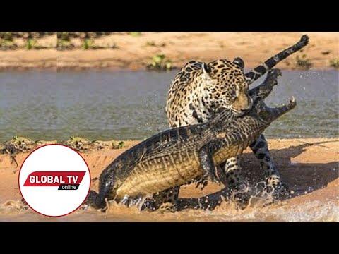 Xxx Mp4 LIVE Kutoka Mbuga Za Wanyama Serengeti Tanzania 3gp Sex
