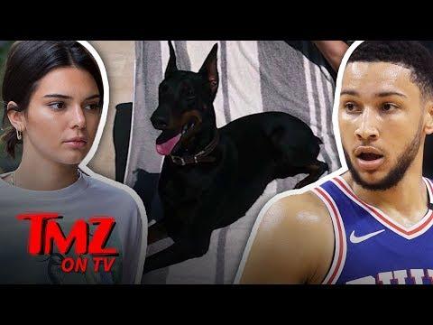 Xxx Mp4 Kendall Jenner S Dog Allegedly Bites Little Girl TMZ TV 3gp Sex