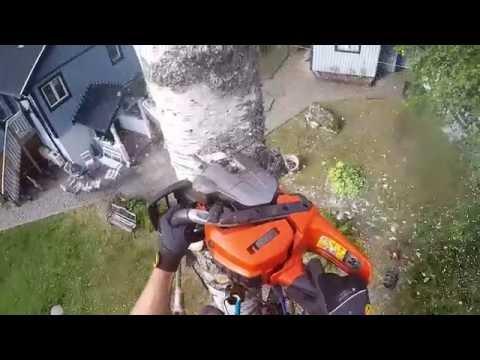 Birch dismantle