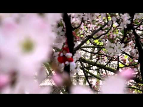 London's Spring's Flowers & Blooms Part 2