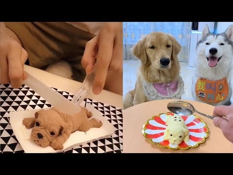 Xxx Mp4 Dog Reaction To Cutting Cake Funny Dog Cake Reaction Compilation 3gp Sex