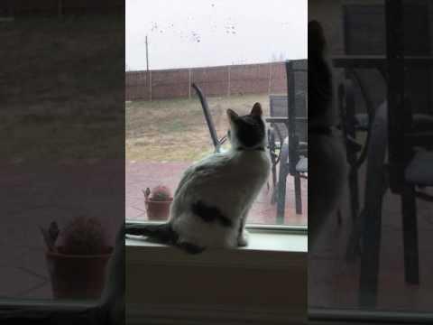 Xxx Mp4 Clara Kitty Discovers Snow ❄😻 3gp Sex