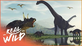 When Dinosaurs Ruled The Earth | Amazing Animals | Wild Things Documentary