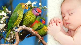 Śpiew ptaków - relaksujący biały szum 10 godzin