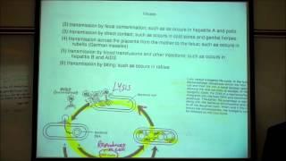 VIRUSES by Professor Fink