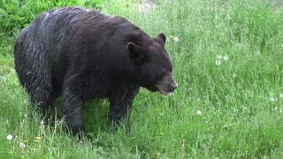 Prepare Now For Fall Black Bear Success