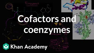 Enzyme cofactors and coenzymes | Biology | Khan Academy