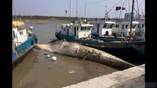 Huge Headless Sea Creature Washes Ashore In China