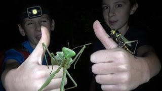 4K Insect Overflow: Grasshopper Punches & Ninja Mantis Moves. Fun Travel Nature Herping Fishing.