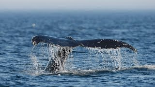 New boating rules to protect whales come into effect