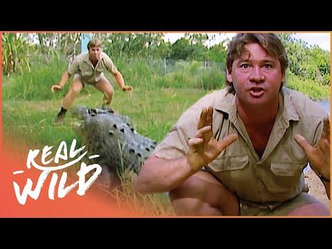 Crocs Down Under Steve Irwin Documentary Real Wild