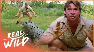 Crocs Down Under [Steve Irwin Documentary] | Wild Things