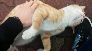 Cat Loves Attention || ViralHog