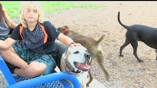 Disease spreading from dogs to owners across Florida