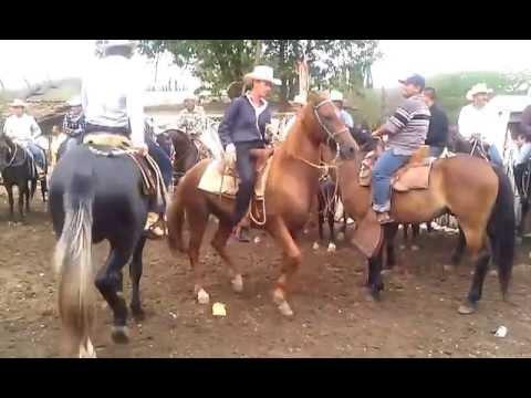 Los Caballos bailando y La Banda tocando en en Coyonqui