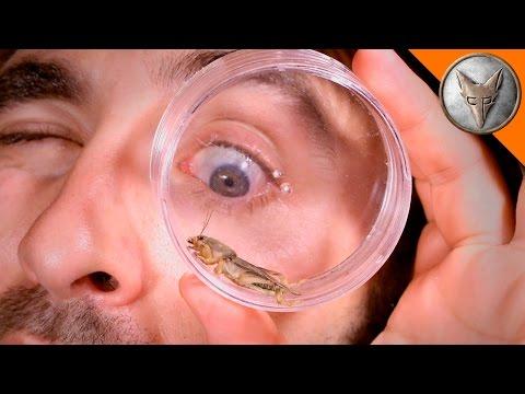 Mole Cricket Experiment