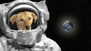 """قصة لا تصدق لأول كلبة تم إرسالها للفضاء """" الكلبة لايكا """" !!"""