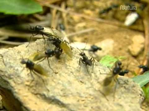 Esas Increibles Hormigas parte 1 4