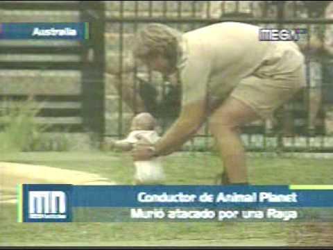 Muerte Del Cazador De Cocodrilos Steve Irwin