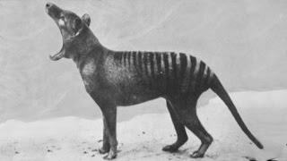 Rare footage of extinct animals