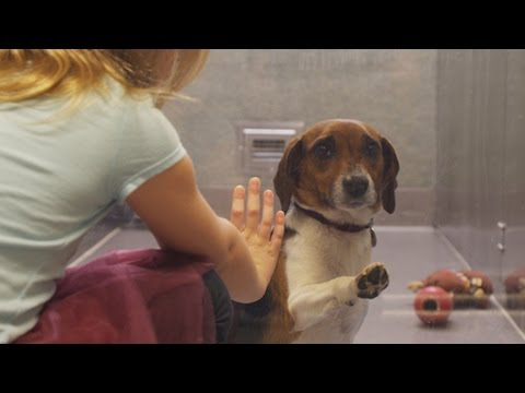 Xxx Mp4 If This Video About A Shelter Dog Doesn 39 T Move You Check Your Pulse 3gp Sex