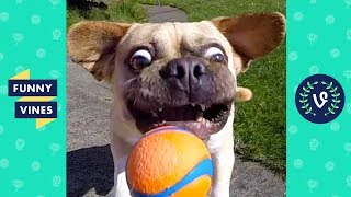 TRY NOT TO LAUGH - FUNNY ANIMALS Compilation | Dogs & Cats | Funny Vines June 2018
